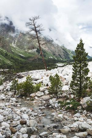 Paisagem de montanha dramática com antiga árvore seca e seca, Região de Elbrus