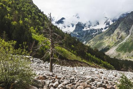 Paesaggio montano drammatico con vecchio grande albero essiccato, regione di Elbrus