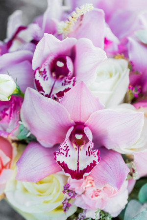 Pink orchid flowers close up