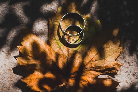 Two wedding rings on autumn grape leaf on sun 스톡 콘텐츠