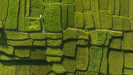 Formes géométriques abstraites de parcelles agricoles de couleur verte. Rizières de Bali. Prise de vue aérienne depuis un drone directement au-dessus du champ.