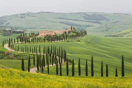 Spring Tuscany landscape. Famous Italian landmark. Cypress alley and yellow flowers field