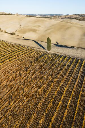 Autumn view of italian vineyards in golden orange colors. Drone aerial photo. Famous Tuscany hills in San Quirico DOrcia, Italy. Winery agriculture in Europe.