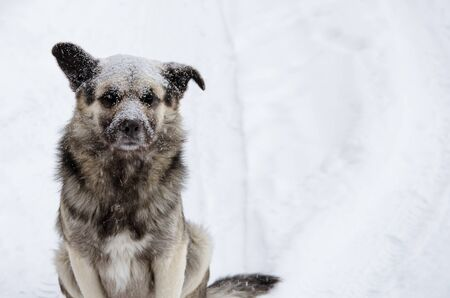 A homeless dog with a sad look sprinkled with snow sits on a snowy road clouse-up