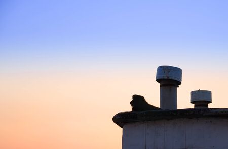 silhouette of a lonely stray dog lying on the roof at sunset background.