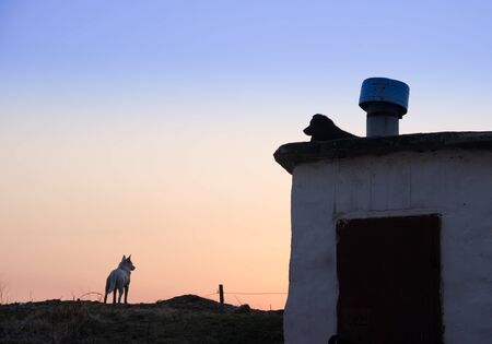 two stray dogs at sunset. one is on the roof, the other is watching the sunset.