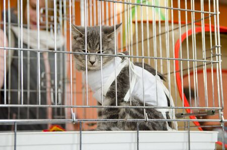 Komsomolsk-on-Amur, RUSSIA - OCTOBER 19, 2019. sad sterilized cat in a bandage in a metal cage for an exhibition