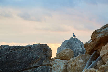 Summer time view. Traveling. Explore world. Seagull sitting on sharp cliff. Rocky terrain. Beautiful nature. Freedom