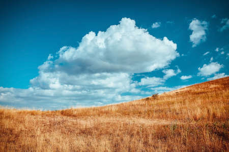 Dry grass on meadow. Blue sky with fluffy white clouds. Autumn season and virgin nature landscape concept. Copy space