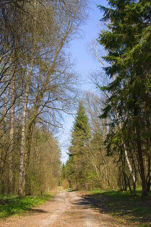 stupendous: Forest