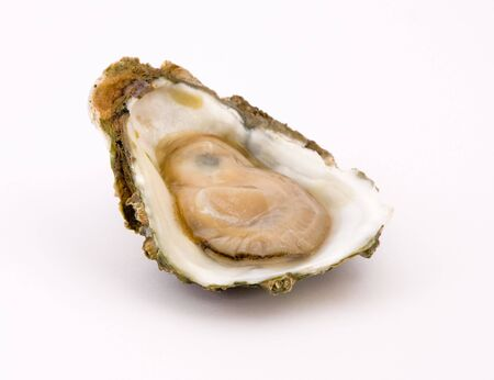 Oyster on a white background Stock Photo