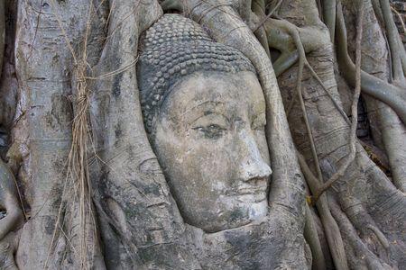 Head of Sandstone Buddha at Wat Mahatat, Ayutthaya.Thailand. photo