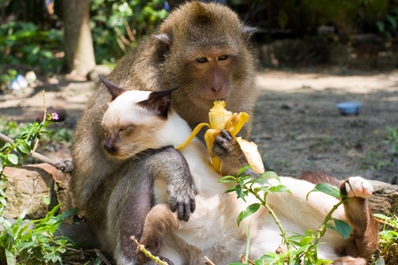 Monkey hugging cat photo