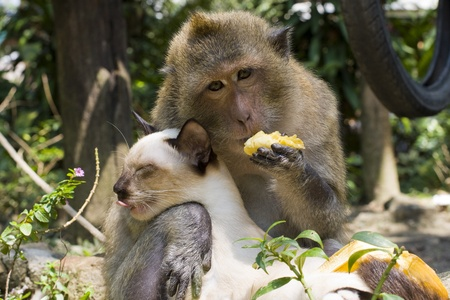 Monkey hugging cat Stock Photo - 9127093