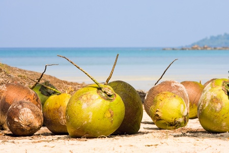 Coconuts on the beach . Thailand . photo