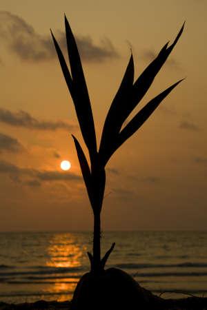 Sunset over the beach, Koh Kood , Thailand . photo