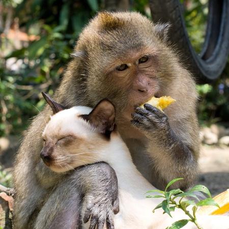 animal trap: Monkey hugging cat Stock Photo