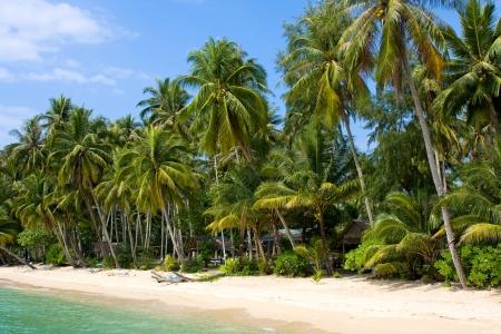 Coconut palm trees on summer beach photo