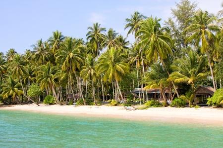Coconut palm tree on the beach near blue sea water photo