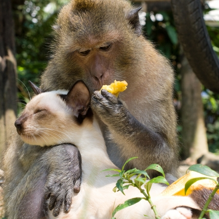 sibling: Monkey and domestic cat  Stock Photo
