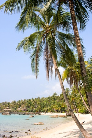 Tropical beach with palm trees under blue sky photo