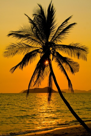 Palm trees silhouette at sunset, Koh Mak island, Thailand photo