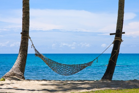 View of nice tropical empty sand beach with some palm and hammock . Koh Kood island. Thailand photo