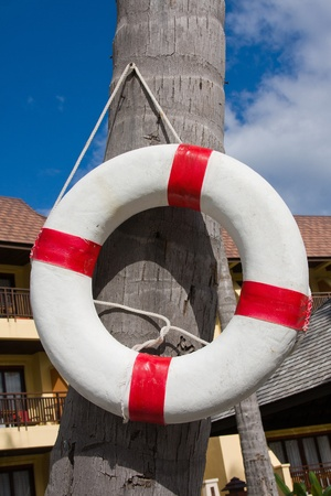 Lifebuoy hanging on a palm tree in Thailand Stock Photo - 13656879