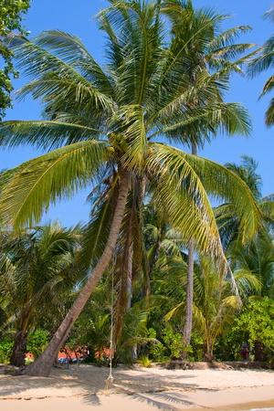 Palm tree on the beach photo