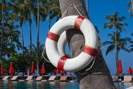 Lifebuoy hanging on a palm tree in Thailand photo