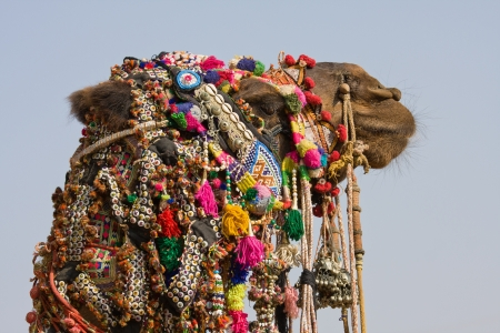 Camel at the Pushkar Fair ( Pushkar Camel Mela ) Rajasthan, India Stock Photo - 16942981