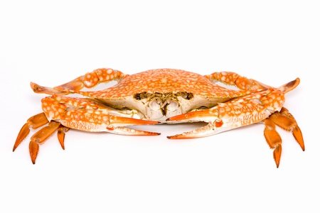 Cooked crab on a white background Stock Photo - 17009656
