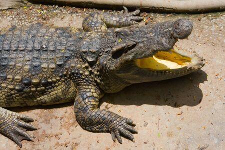 Crocodile Stock Photo - 17009970