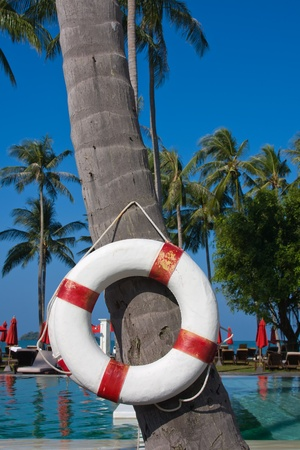 Lifebuoy hanging on a palm tree in Thailand Stock Photo - 17009882