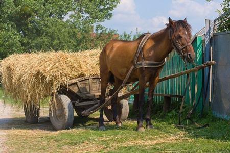 A chestnut mule harnessed to a traditional hay cart. Ukraine. Stock Photo - 17010014