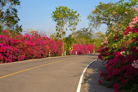 Beautiful summer landscape with road and flowers. Hua Hin, Thailand Stock Photo - 17432533