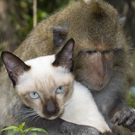 Monkey is friends with domestic cat . photo