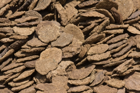 poverty india: Dry cow dung in Pushkar, Rajasthan, India. Stock Photo