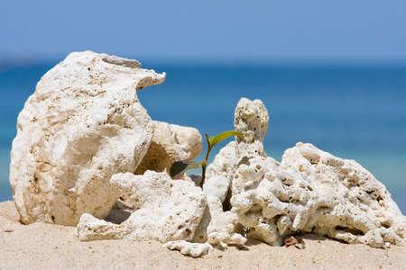 Beautiful shells on the beach. Koh Phangan, Thailand. photo