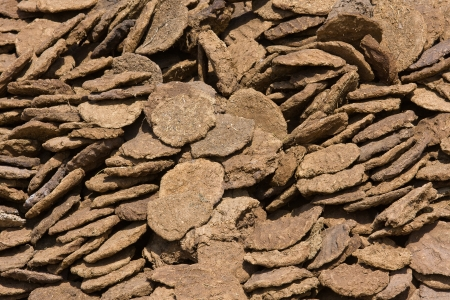 dry cow: Dry cow dung in Pushkar, Rajasthan, India. Stock Photo