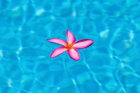 Tropical pink frangipani floating in blue pool , Thailand photo