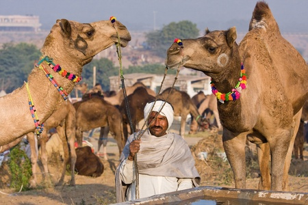PUSHKAR, INDIA - NOVEMBER 23: Pushkar Camel Mela (Pushkar Camel Fair) on November 23, 2012 in Pushkar, Rajasthan, India. This fair is the largest camel trading fair in the world.