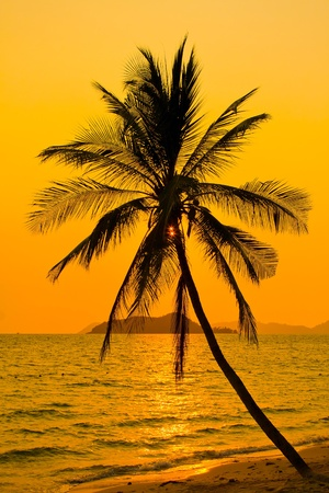 Palm tree silhouette at sunset, Koh Mak island, Thailand photo