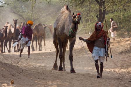 PUSHKAR, INDIA - NOVEMBER 23: Pushkar Camel Mela ( Pushkar Camel Fair ) on November 23, 2012 in Pushkar, Rajasthan, India. This fair is the largest camel trading fair in the world.