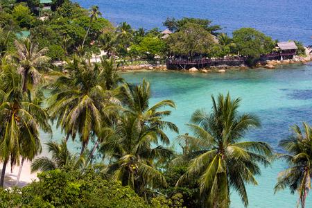 arbre vue dessus: �le tropicale de Koh Phangan, Tha�lande Banque d'images