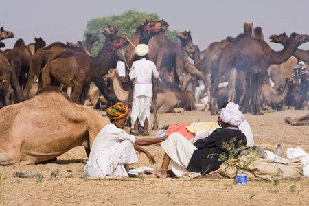 PUSHKAR, INDIA - NOVEMBER 21: Pushkar Camel Mela (Pushkar Camel Fair) on November 21, 2012 in Pushkar, Rajasthan, India. This fair is the largest camel trading fair in the world.