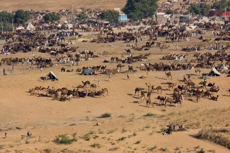 PUSHKAR, INDIA - NOVEMBER 24, 2012: Pushkar Camel Mela ( Pushkar Camel Fair )  Rajasthan, India. This fair is the largest camel trading fair in the world.