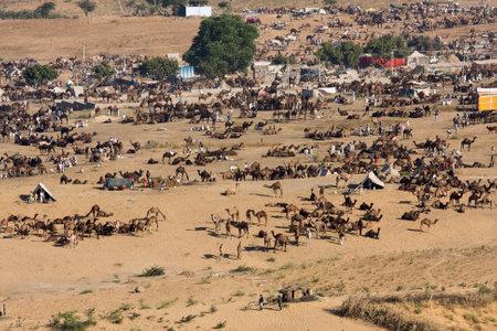 PUSHKAR, INDIA - NOVEMBER 24: Pushkar Camel Mela ( Pushkar Camel Fair ) on November 24, 2012 in Pushkar, Rajasthan, India. This fair is the largest camel trading fair in the world.