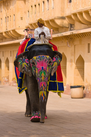JAIPUR, INDIA - NOVEMBER 10, 2012: Decorated elephant on the road at Amber Fort in Jaipur, Rajasthan, India. 新聞圖片