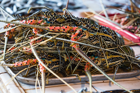 city fish market: Selling fresh lobsters on the market in island Coron, Philippines.
